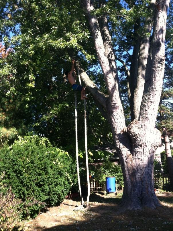 Barefoot Tree
